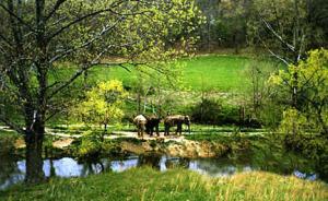 Elephants at a sanctuary