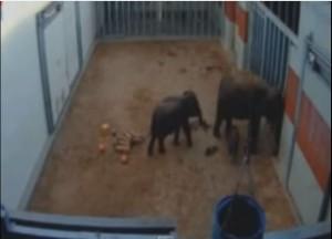 Oklahoma City Zoo elephant barn